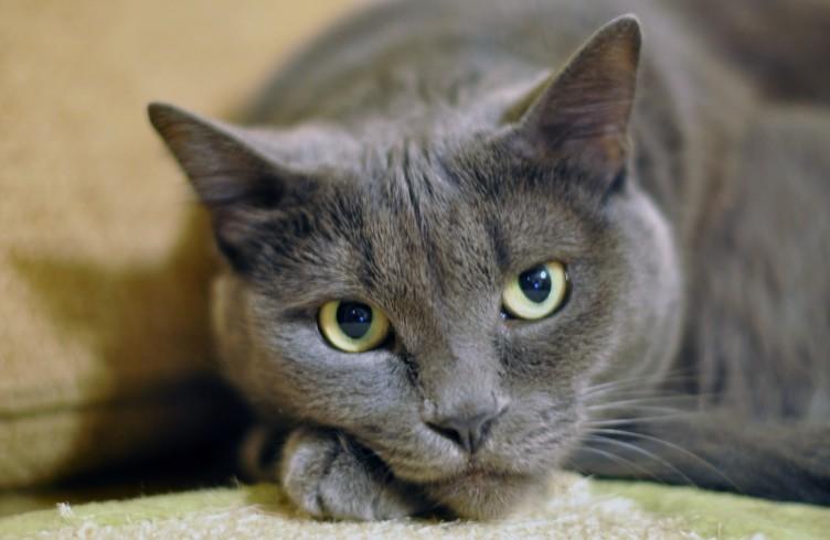 Katze auf Katzenklo