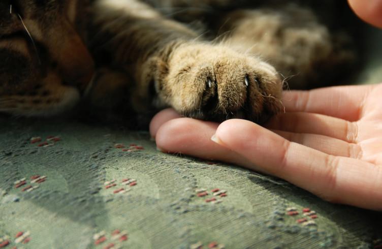 Händchen halten beim einschlafen bedeutung