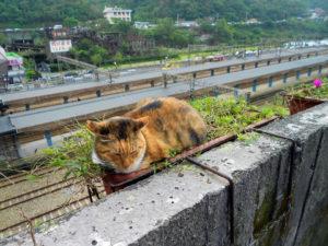 Katzen retten Stadt in Taiwan