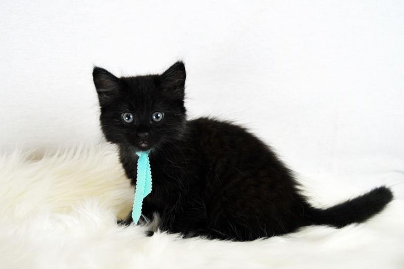 Die höflichste Katze der Welt?