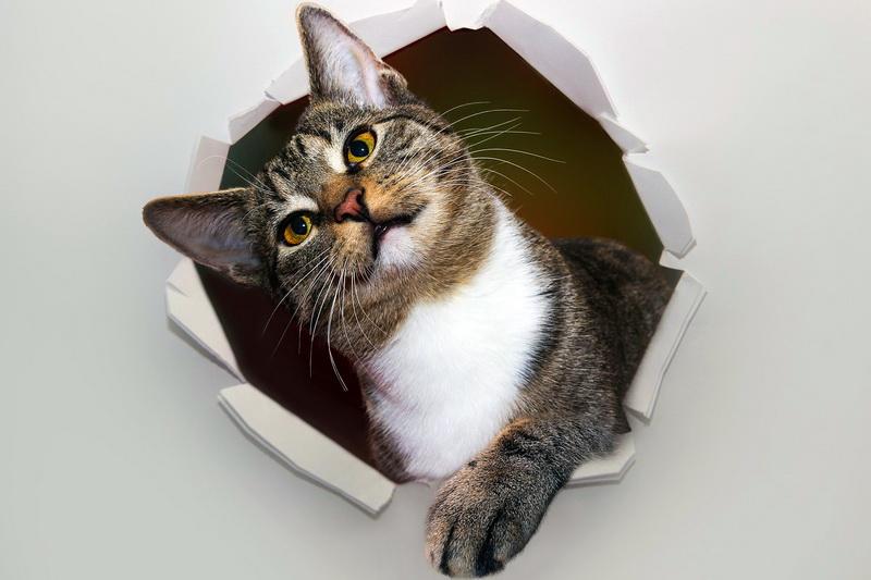 Die Katze, die durch Wände geht