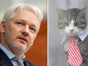 Wo ist Julian Assanges Katze?