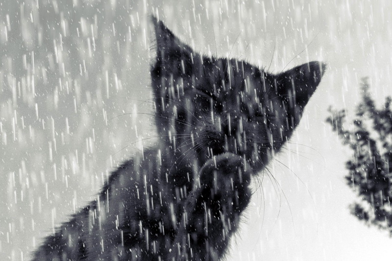 Soll man Katzen bei Regen rauslassen zur Abhärtung?