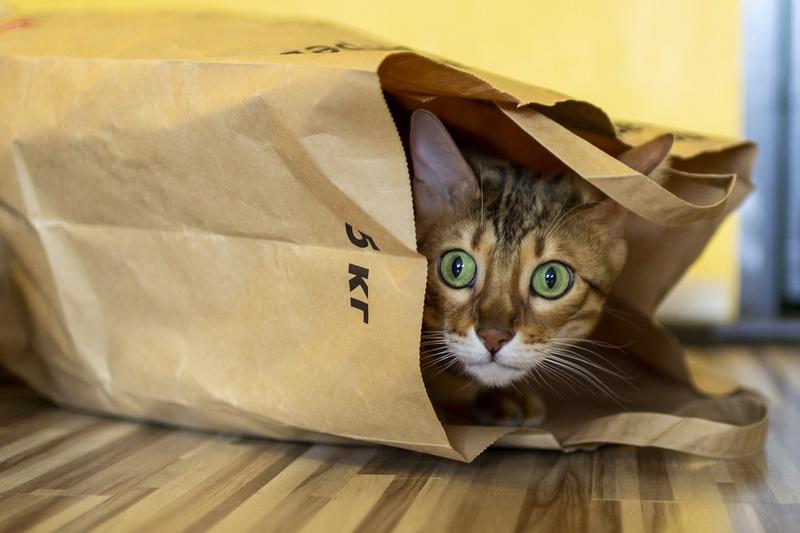 Soll ich meine neue Katze zurückbringen?