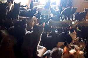 300 Katzen aus Wohnung befreit