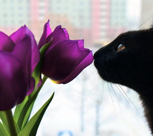 10 besten Pflanzen für Katzen + Giftig-Liste