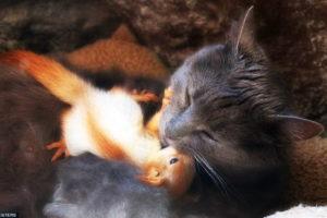 Katze adoptiert 4 Eichhörnchen