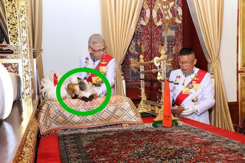 Verwirrung über Katze bei Krönung des thailändischen Königs