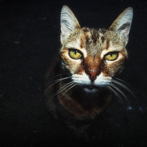 Katzen Senioren Pflege