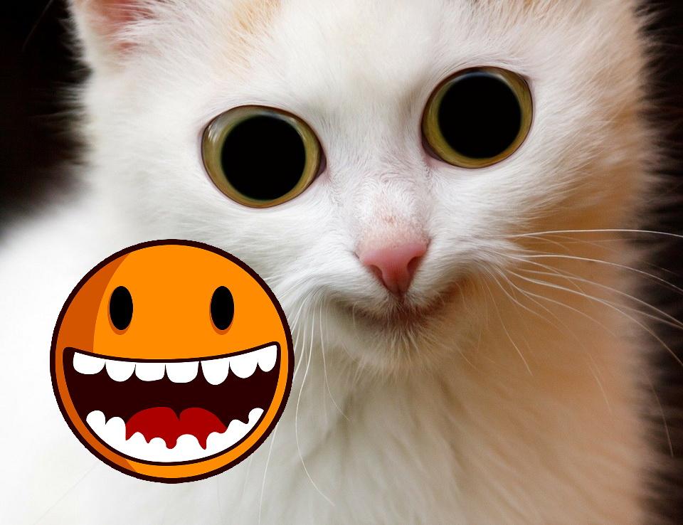 Echte Katzen: Teil 6