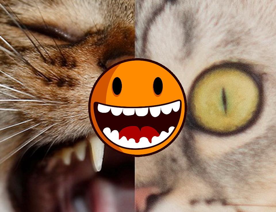Echte Katzen: Teil 7