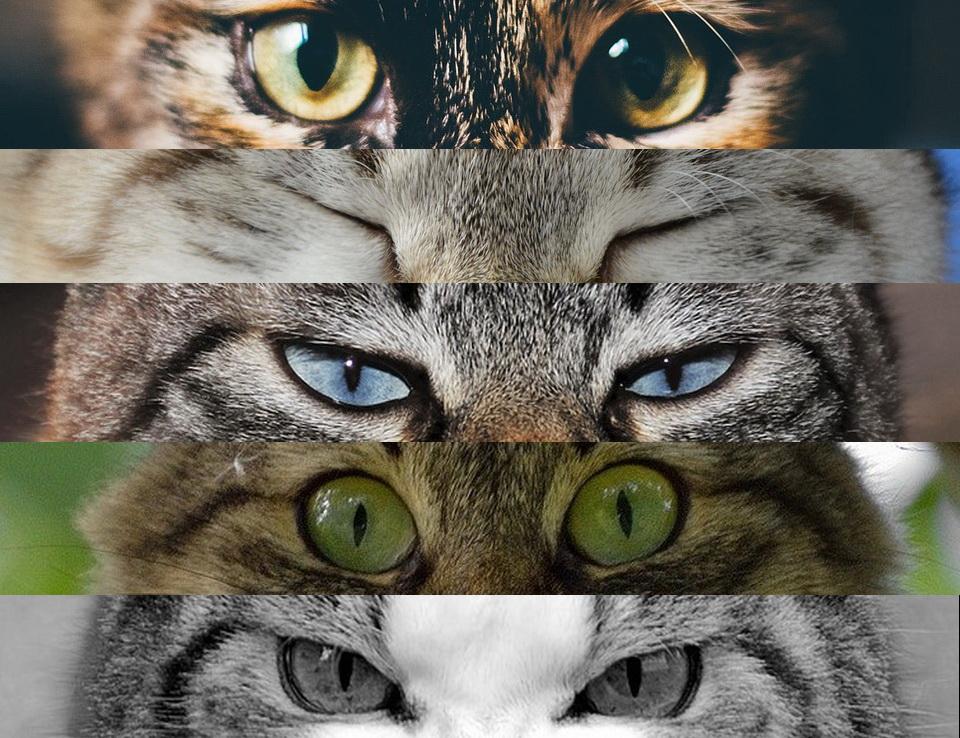 Katzen-Flows