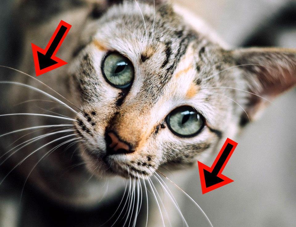 Wie Katze am besten weg stoßen