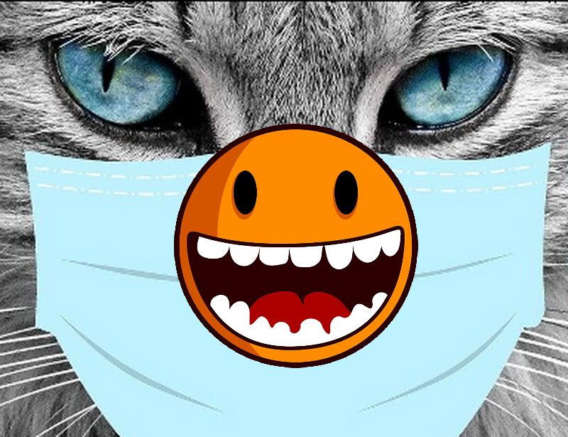 Katzen Memes #9