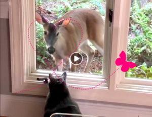 Reh verliebt sich in Katze