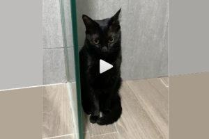 Katze trickst, um nicht allein zu sein