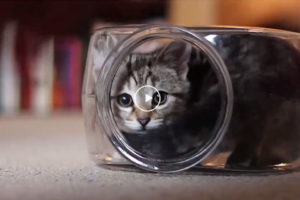 Katze verliebt in Fischglas