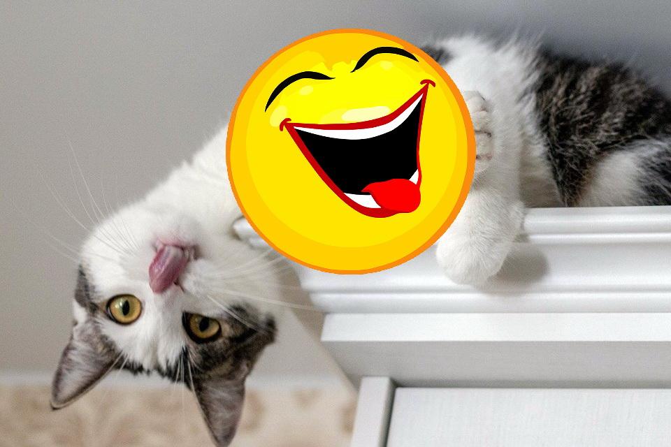 Katzen Memes #12