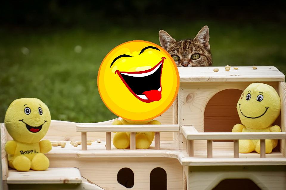 Katzen Memes #13