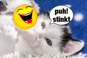 Katzen Memes #15