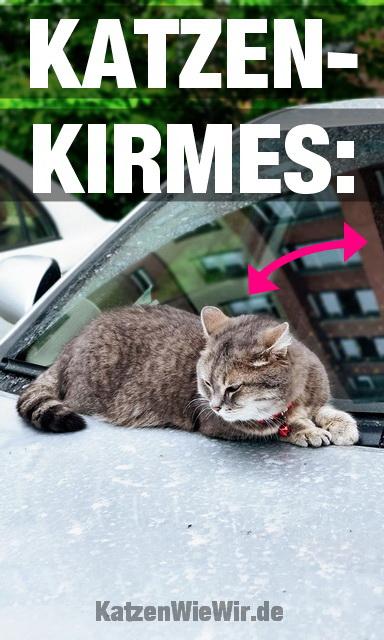 lustige katzen memes 17  katzenwiewirde