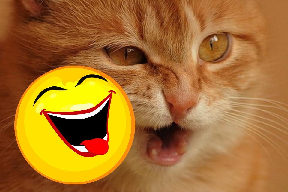Katzen Memes #17
