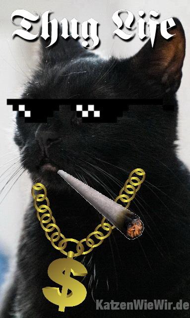 lustige katzen memes 16  katzenwiewirde