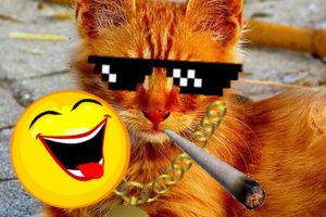 Katzen Memes #16