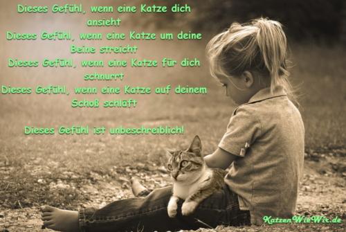 KatzenWieWir_Dieses Gefühl