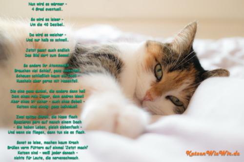 KatzenWieWir_Es wird wärmer
