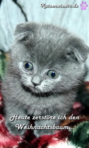 funny-cats-001