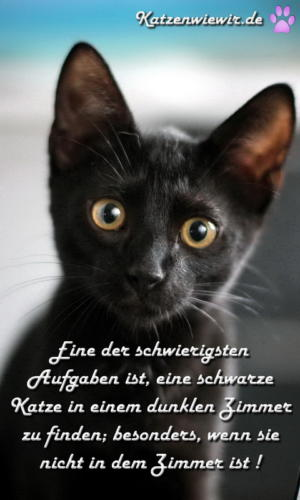 funny-cats-002