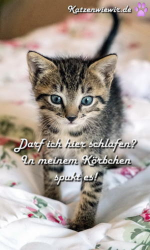 funny-cats-005