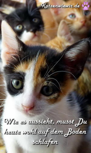 funny-cats-006