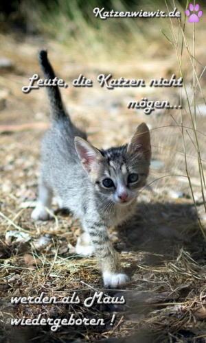 katzen-sprüche-05