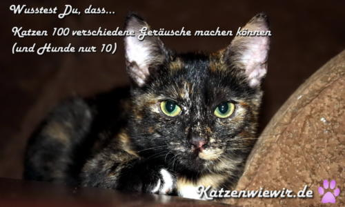 sweet-cats-002