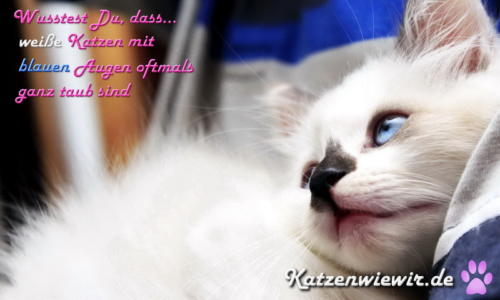 sweet-cats-003