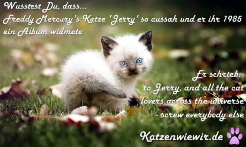 sweet-cats-004