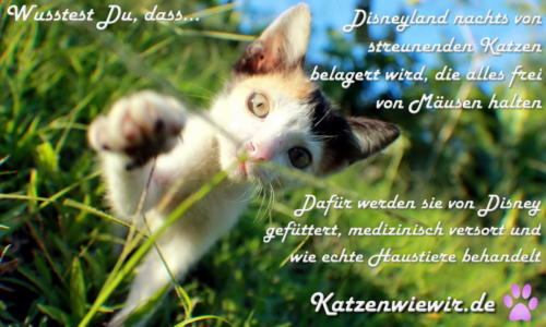 sweet-cats-005